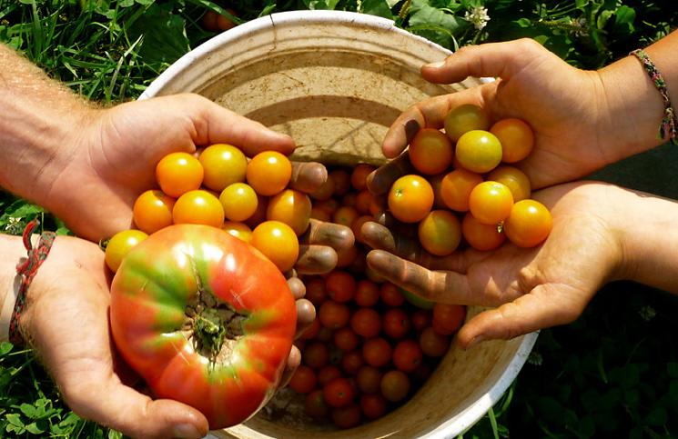 agricoltura.jpg